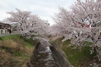 IMG_4653inasakibasi.jpg